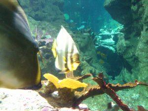aquarium_cherbourg